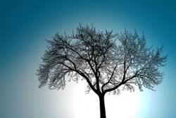 1006441_tree_silhouette_against_sky.jpg