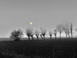 1137904_sunset_in_black_and_white_.jpg