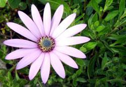 503937_daisy.jpg