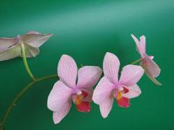 711743_orchid.jpg